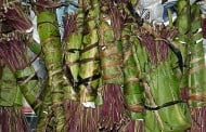 Nearly 5 tons of khat discovered by the Swiss authorities