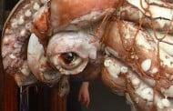 Squid shipment from South America contains nearly 50 kilos of cocaine