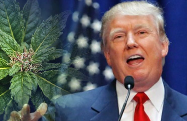 Trump's administration intends to raid legal marijuana dispensaries